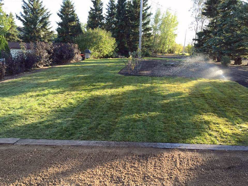 Residential Sod Placement