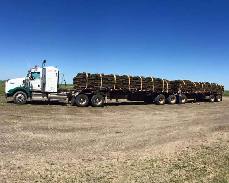 Semi Load of Sod