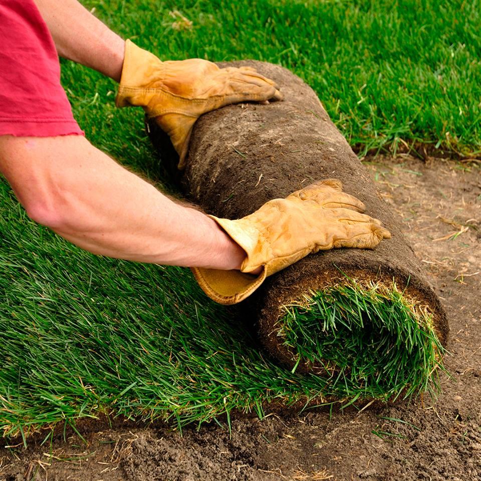 Lawn Restoration Regina